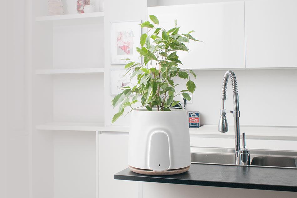 NATEDE Luftreiniger – intelligent durch reinigende Pflanzenkraft